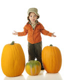Which Pumpkin? Royalty Free Stock Photo