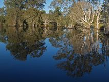 Which way is up. Reflections in the water at Eagleby wetlands Stock Photo