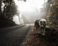 Whie pies podkrada się swój zdobycza zdjęcie royalty free