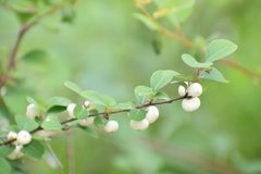 Whight dot plant. White dot plan very small but catched by dslr Royalty Free Stock Photography