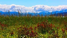 Whild blommor i glaciär skäller nationalparken, Alaska Royaltyfria Foton