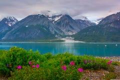 Whild blommor i glaciär skäller nationalparken, Alaska Royaltyfri Fotografi