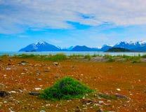 Whild blommor i glaciär skäller nationalparken, Alaska Arkivbild