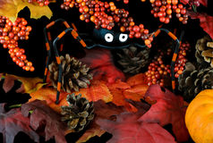 Whimsical Halloween Spider in Leaves and Berries Stock Image
