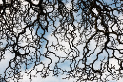 Whimsical pattern of magnolia tree branches Royalty Free Stock Images
