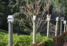 Whimsical row of artful rustic birdhouses on garden fence Stock Images