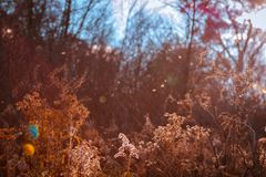 Whimsical shot of flora along a hiking trail. During the fall stock images