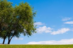 Whimsical trees, clouds and sky Royalty Free Stock Photo