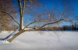 Whinter tree at lake Stock Photography
