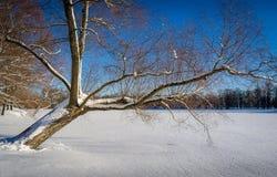 Whinter tree at lake Stock Photography