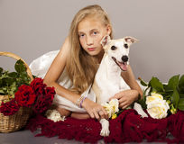 Whippet couple stock images
