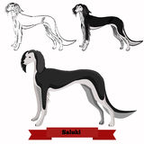 Whippet dog vector illustration. Royalty Free Stock Images