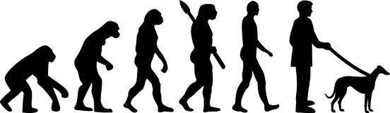 Whippet ewolucja ilustracja wektor