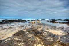 whippets пляжа 2 Стоковое фото RF