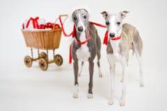 Whippets de Santa com carro do Natal Imagens de Stock