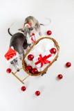 Whippets della Santa con il carrello di natale Immagine Stock Libera da Diritti