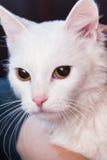 Whire-Katzenporträt lizenzfreies stockfoto