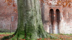 Whirling beech leaves, Nijenbeek Castle, Holland stock video