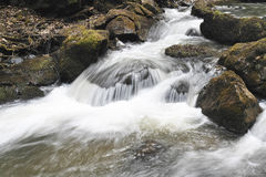 Whirling river in wildness nature Royalty Free Stock Images