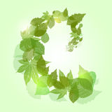 Whirlpool with green leaves and sparkles Royalty Free Stock Image