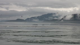 Whirlpool of water of Pacific Ocean on background amazing landscapes Alaska. stock video