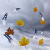 Whirlwind texture with feathers and autumn leaves. Wallpaper of a gut of wind against a dark sky with bird feathers and autumn leaves circling around Royalty Free Stock Photos