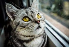 Whiskas-Katze Lizenzfreies Stockfoto