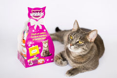 Whiskas Stock Photo