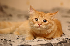 Whiskered cat Stock Photo