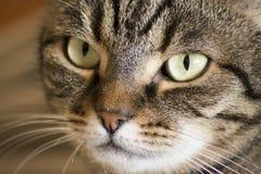 whiskers royaltyfri fotografi