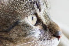 whiskers lizenzfreies stockfoto