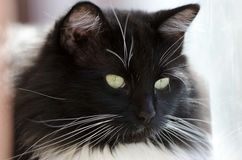Whiskers. Close shot of cats Stock Photos