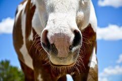 whiskers Stockfotos