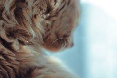 whiskers stockfotografie