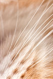 Whiskers Stock Images