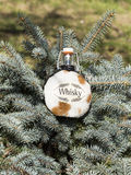 Whiskey bottle in a leather case on the branches of blue spruce Stock Images