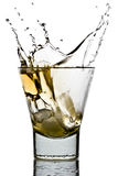 Whiskey splash Royalty Free Stock Photo
