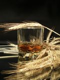 Whisky And Wheat Stock Images