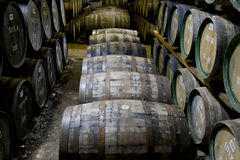 Whisky barrels in a distillery. Whisky barrels maturing in a distillery in Scotland royalty free stock photography