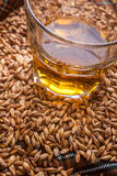Whisky and grains Royalty Free Stock Photo
