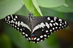 The Whisper Of A Butterfly royalty free stock photography