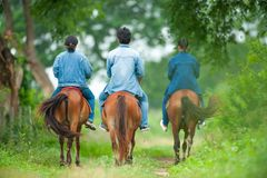 Животная наука изучая верхом Тайская лошадь Whispere лошади стоковое фото
