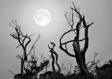 whisperer луны Стоковое Изображение RF