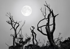 Whisperer de lune Image libre de droits