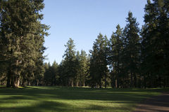 Whispering Firs Golf Course Royalty Free Stock Photo