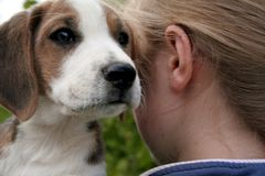 Whispering secrets. Puppy whispers secrets into a girls ear Stock Photography