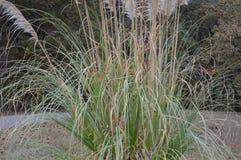 Whispy buisson avec le caractère en automne Photos stock