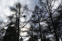 Whispy träd Royaltyfri Fotografi