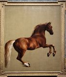 Whistlejacket av George Stubbs royaltyfri foto