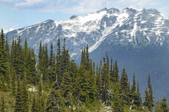 Whistler landscape with forest and mountains. British Columbia. Royalty Free Stock Image
